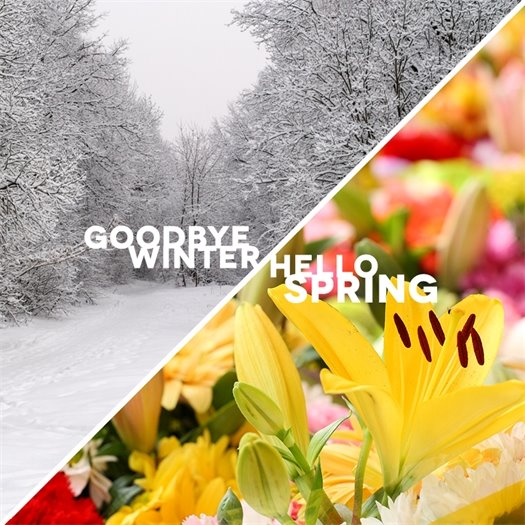 Goodbye Winter Hello Spring Image