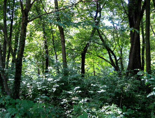 Preserve Wooded Area