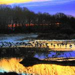 Plainsboro Preserve Early Morning